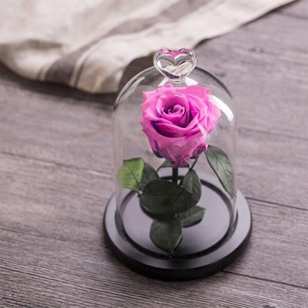 Fleur Artificielle Rose Éternelle Sous cloche
