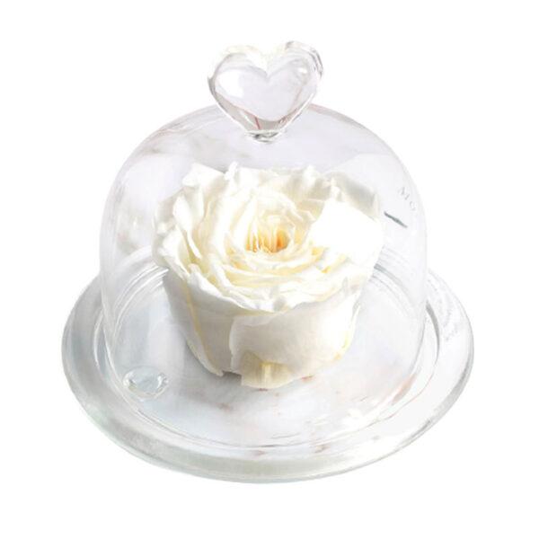 Mini Rose Éternelle Blanche Sous Cloche