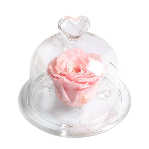 Mini Rose Éternelle Sous Cloche Rose