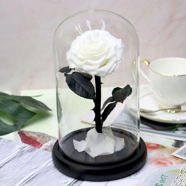 rose blanche éternelle