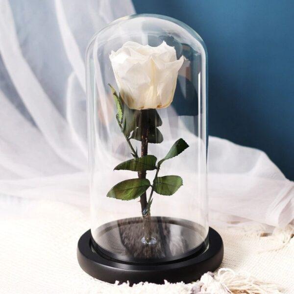 Rose blanche éternelle sous cloche