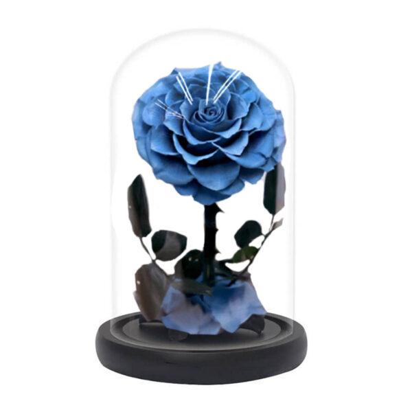 rose bleu éternelle sous cloche