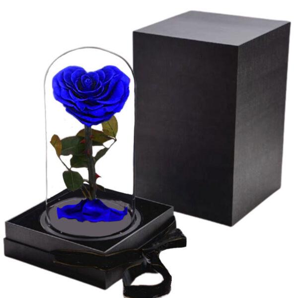 Rose éternelle bleu roi sous cloche