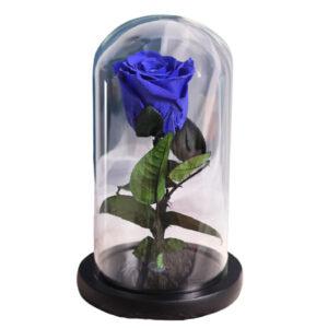 Rose éternelle bleu sous cloche