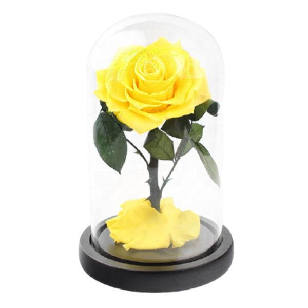 rose éternelle jaune sous cloche
