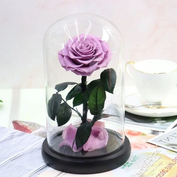 Rose éternelle Mauve