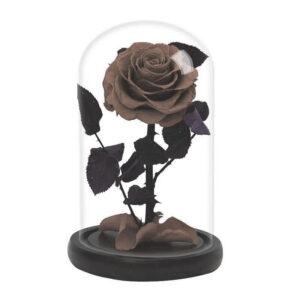 rose éternelle naturelle sous cloche