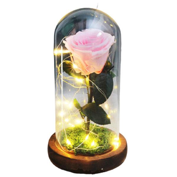 Rose éternelle rose sous cloche