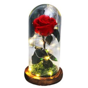 rose éternelle rouge sous cloche
