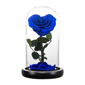 Rose éternelle sous cloche bleu