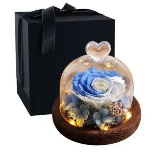 Rose éternelle sous cloche lumineuse bleue blanche