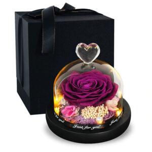 Rose éternelle sous cloche lumineuse violette