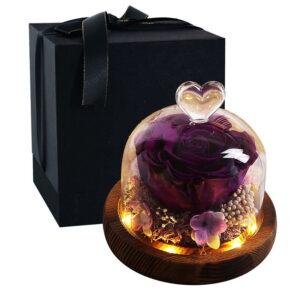 Rose éternelle sous cloche lumineuse violette prune