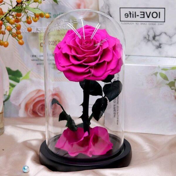 rose éternelle sous cloche rose