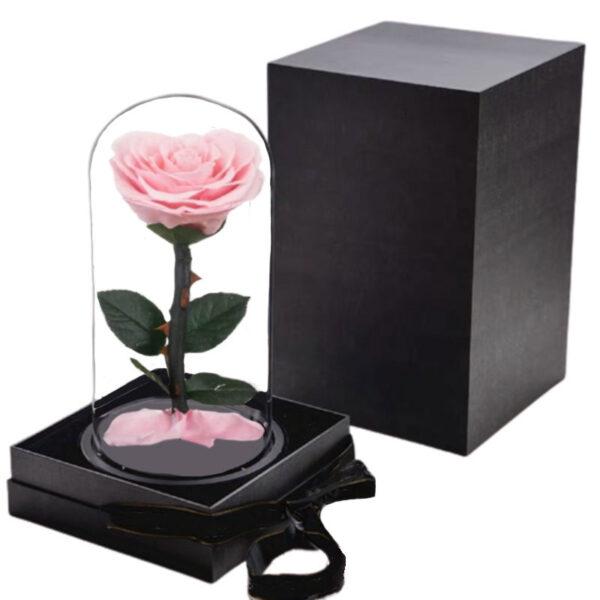Rose éternelle sous dome