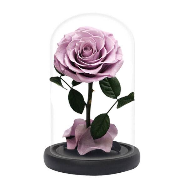 Rose Éternelle sous verre rose pêche