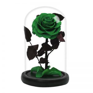 Rose éternelle verte