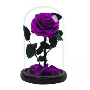Rose Éternelle Violette Sous Cloche