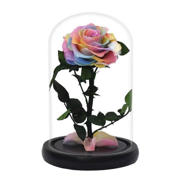 Rose multicolore éternelle