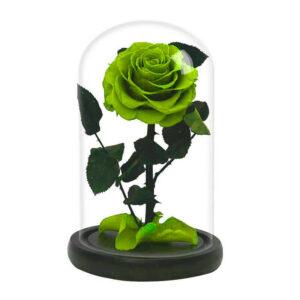 Rose naturelle éternelle