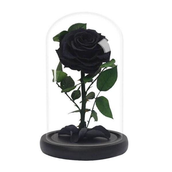 Rose noir éternelle