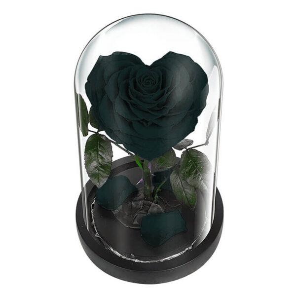 Rose Noir éternelle sous cloche