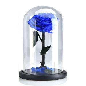 Rose stabilisée bleu sous cloche