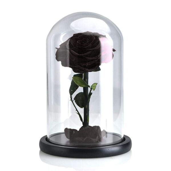 Rose Stabilisée Noire Sous Cloche