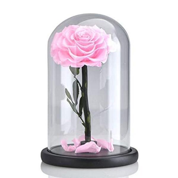 Rose stabilisée rose sous cloche