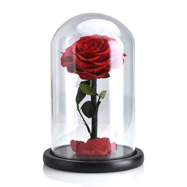 Rose Stabilisée Rouge sous cloche