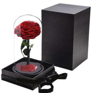 Rose Stabilisée Rouge avec Boite