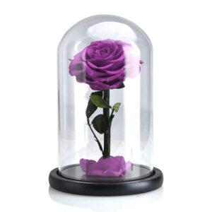 Rose Stabilisée violette sous cloche