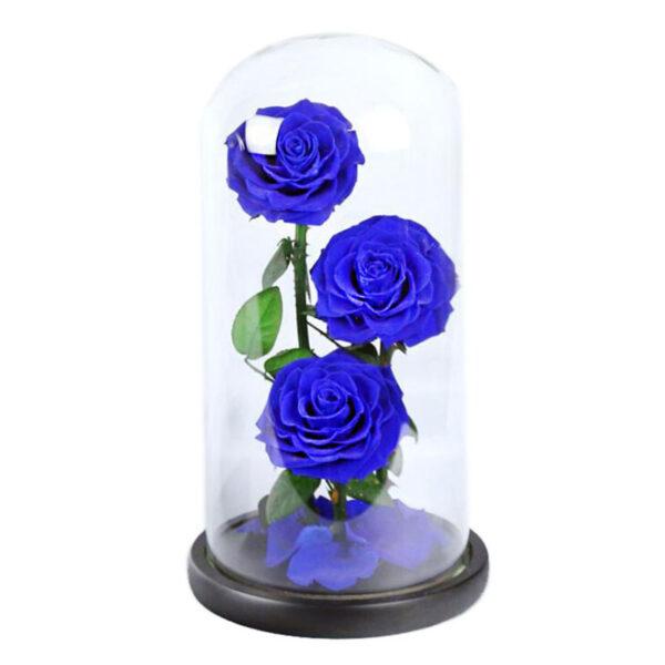 roses éternelle sous cloche