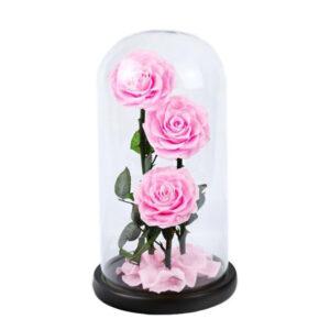 Roses éternelles roses sous cloche