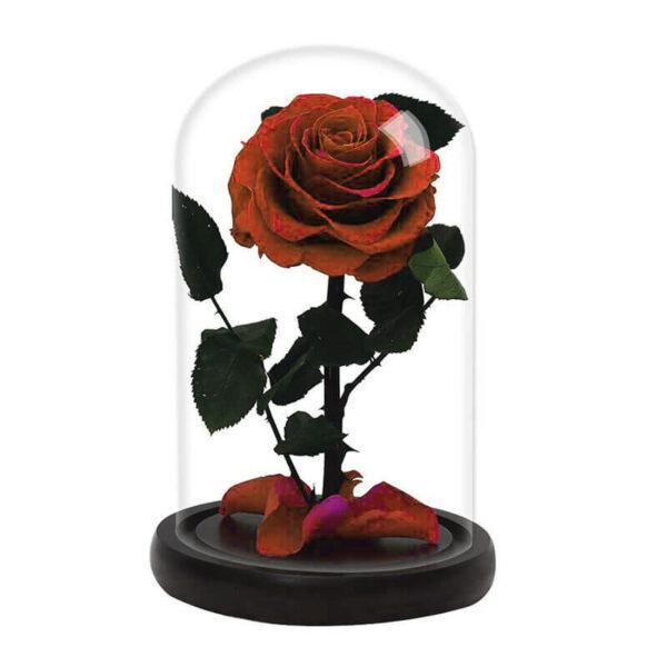 une rose éternelle sous cloche rouge feu