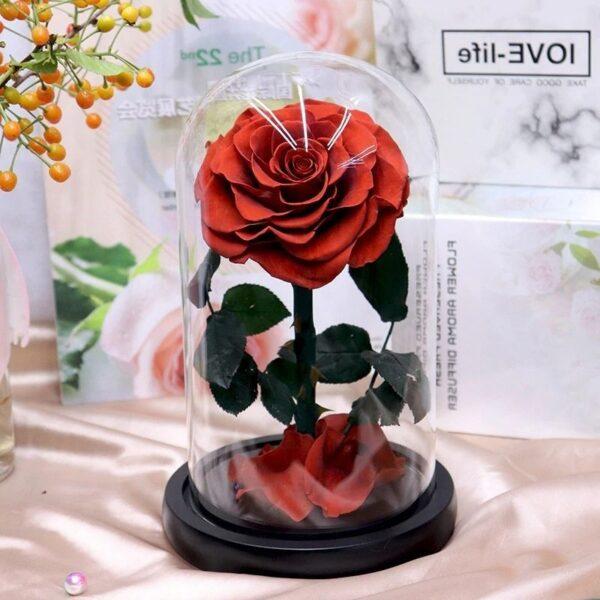 une rose éternelle sous cloche