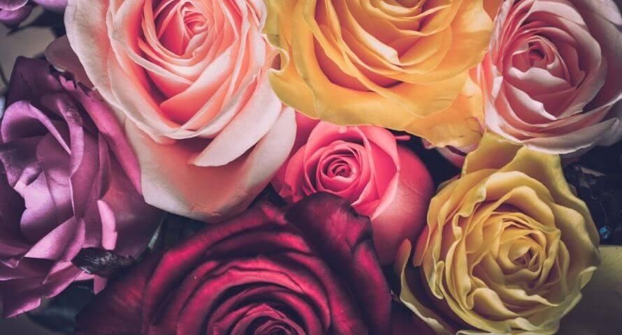 Signification couleurs des roses