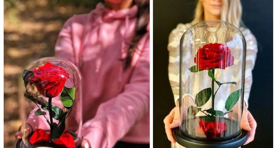 A qui offrir une rose éternelle