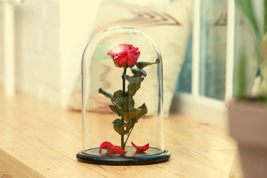 Rose éternelle signification