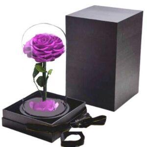 Rose Éternelle Violette