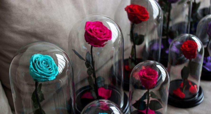 Rose stabilisée couleur