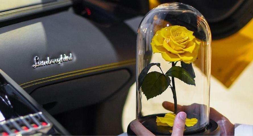 Rose stabilisée jaune