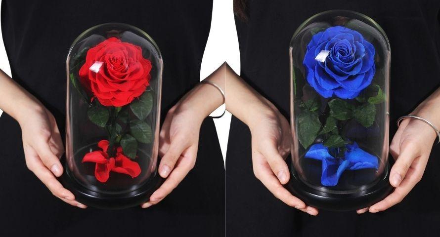 Rose éternelle pour saint-valentin 2021