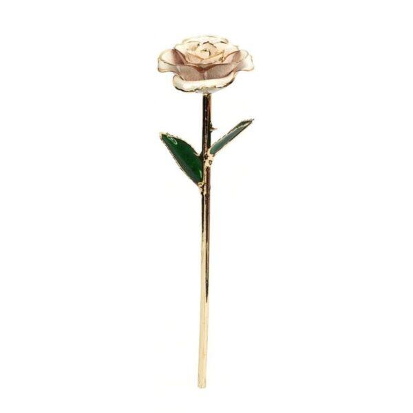 rose éternelle gold - rose éternelle or