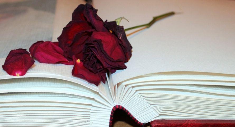 Sécher des pétales de roses dans un livre